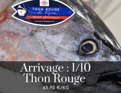 Arrivage : THON ROUGE