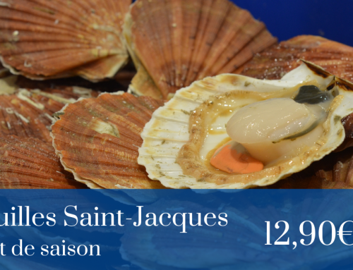 Arrivage : COQUILLE SAINT JACQUES